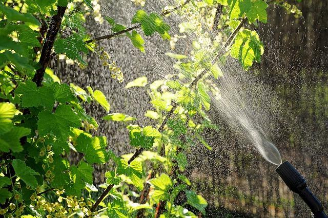 traitement des arbres Champs-sur-Marne
